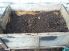 compost made last year